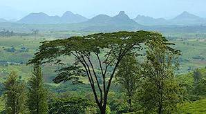 The wilderness areas of Mozambique are wild and untamed.