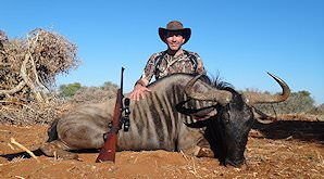 A blue wildebeest hunted in the bushveld.