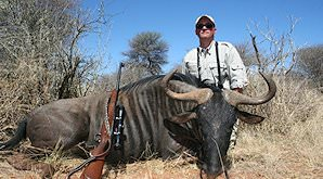 Blue wildebeest hunted in South Africa.