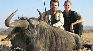 A pair of hunters with a blue wildebeest trophy.