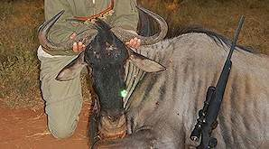 A blue wildebeest trophy is presented for a celebratory photograph.
