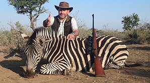 A zebra hunted in the eastern Free State.