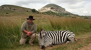 A Burchell's zebra hunt in the eastern Free State.