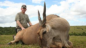 A Cape eland taken on safari in the Eastern Cape.