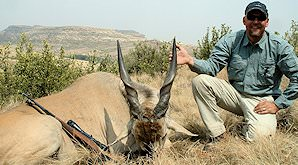 A Cape eland hunted on safari in South Africa.