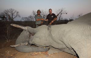 An elephant hunting safari in Zimbabwe.