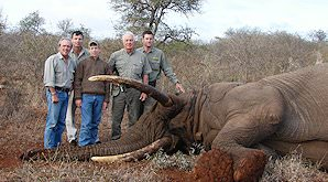 A proud group of hunters with an elephant trophy.