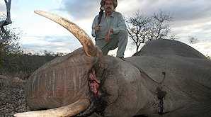 A hunter poses atop his elephant trophy.