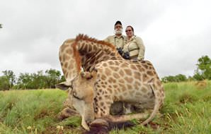 A giraffe hunted on a safari in South Africa.