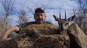 A klipspringer hunt in South Africa.
