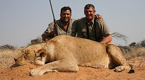 A successful lion hunt in the Kalahari.