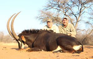 A sable antelope hunt in Zimbabwe.