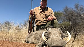 A warthog hunted on safari in South Africa.