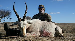 A hunter sits behind his white blesbok trophy.