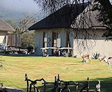 A handful of springbok roam the lawns of the camp.