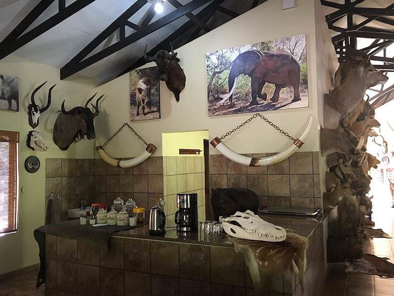 Lowveld Hunting   South Africa - ASH Adventures on