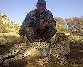 Cheetahs are usually hunted in Zimbabwe or Namibia.