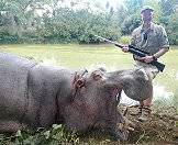 A hippo hunted on safari in Southern Africa.