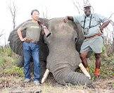 The elephant is the largest animal that can be hunted.