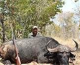Cape buffalo can be hunted in South Africa, Zimbabwe and Mozambique.