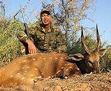 Bushbuck are one of the medium-sized antelope available for hunting.