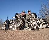 Zebras are popular plains game trophies.