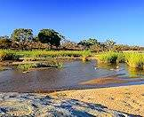 One of the rivers in the Kruger National Park.