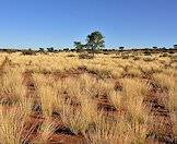 The Kalahari is a semi-arid desert.