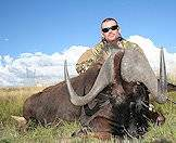 Hunt the black wildebeest on open plains.