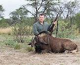 Black wildebeest were repopulated through hunting and conservation efforts.