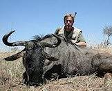 The blue wildebeest, or 'poor man's buffalo'.