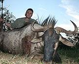 Hunt blue wildebeest with ASH Adventures.