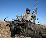 Hunt blue wildebeest with a minimum .270 caliber and a good 150-grain bullet.