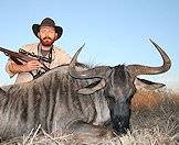 A blue wildebeest hunt.