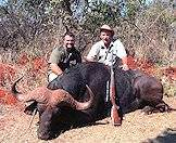 Trust your professional hunter when hunting buffalo.