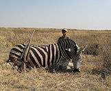 The zebra is highly dependent on water and good grazing.