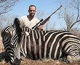 The zebra's striking appearance makes it a great trophy choice.