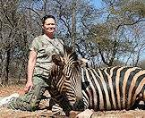 Zebras are popular amongst plains game hunters.