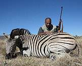 Burchell's zebra can be hunted almost anywhere in South Africa.