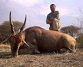 A hunter stand triumphantly alongside his eland trophy.