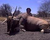 Hunt the mighty eland with ASH Adventures.