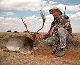 The fallow deer is one of the exotic animals that can be hunted in South Africa.