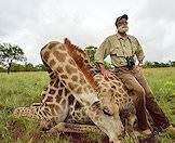 Giraffe hunting is typically conducted walk-and-stalk style.