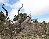 The kudu is revered for its spectacular spiral horns.