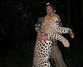 Successfully hunting the leopard is quite an accomplishment.