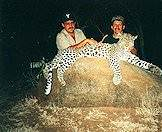 Leopard hunting may require many hours in a hide.