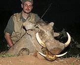 Hunt warthog at night.