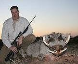 A warthog hunted in the late afternoon.