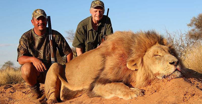 trophy hunting the lion in south africa ash adventures