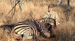 Zebra is one of the plains game animals for which we hunt on the 10 Day Plains Game and Kruger Package.